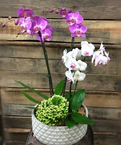 Mother's Day Plants & Orchids