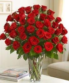 Four Dozen Roses in Port Charlotte FL, Port Charlotte Florist