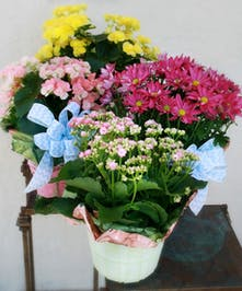 "We offer a variety of 6"" blooming plants 