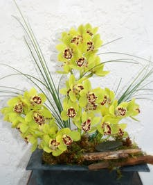 Driftwood Orchids - orchids and driftwood.