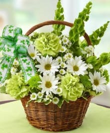 Shamrock Basket - Bells of Ireland, Daisies, green carnations and poms