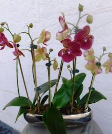 Orchid Garden -
