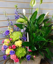 Plant Flower Basket Combo - Fresh cut flowers and a green plant