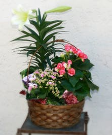 Collection of blooming plants for Easter | Port Charlotte Florist