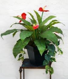 Anthurium & Ivy (Silk)