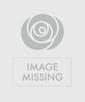 One Dozen Red Roses- Premium