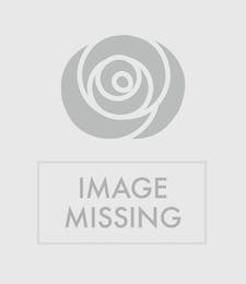 Double Easter Lily