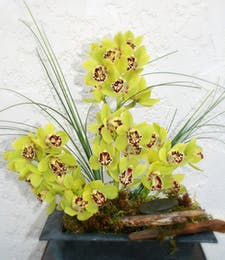 Driftwood Orchids