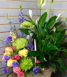 Plant Flower Basket Combo