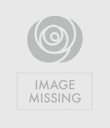 Triple Easter Lily